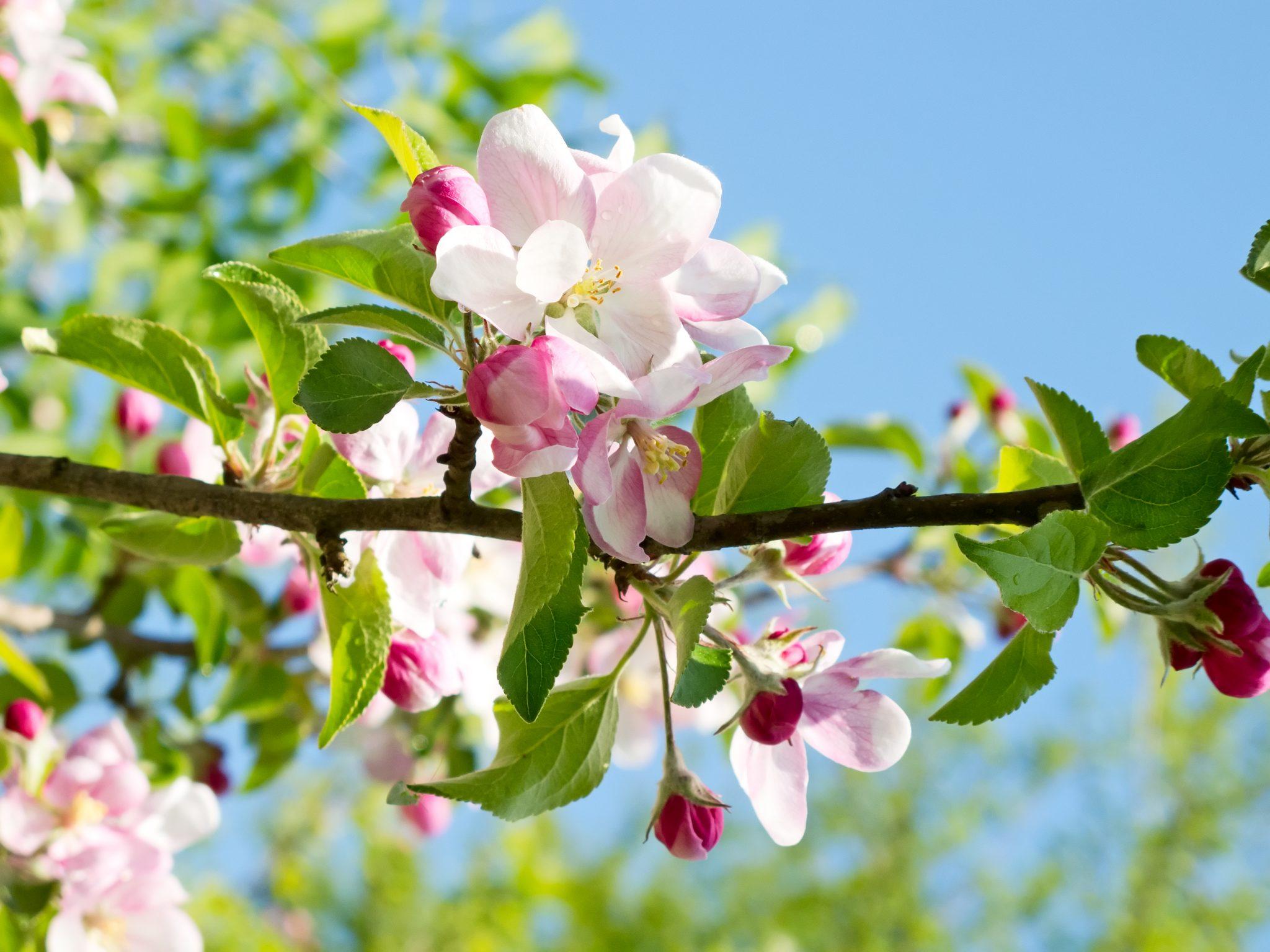COLOURBOX3363716 Forår Blomst