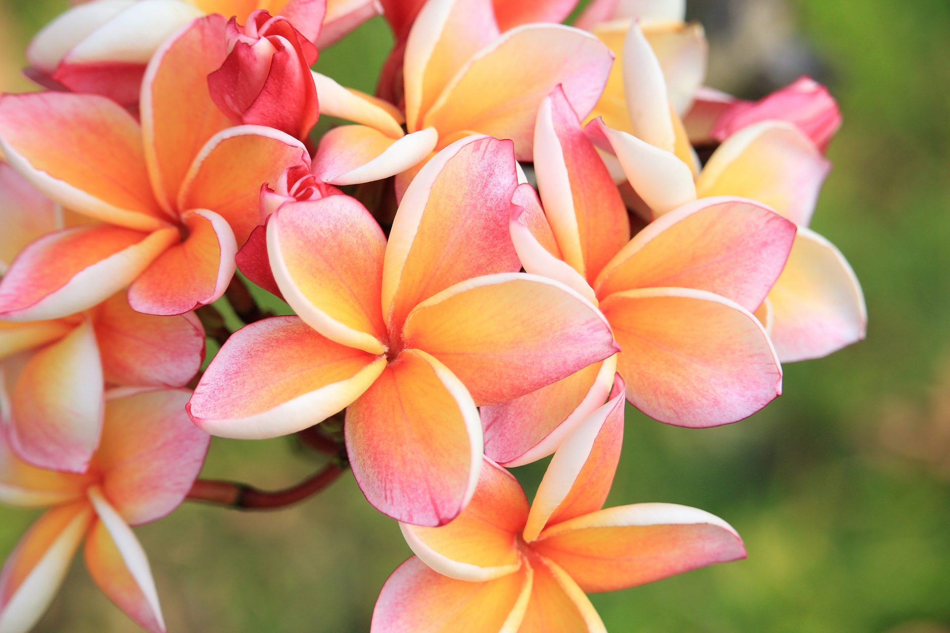 Bali Blomster Feng Shui
